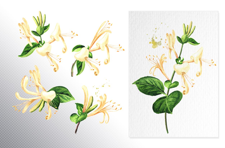 Honeysuckle. Watercolor set example image 3