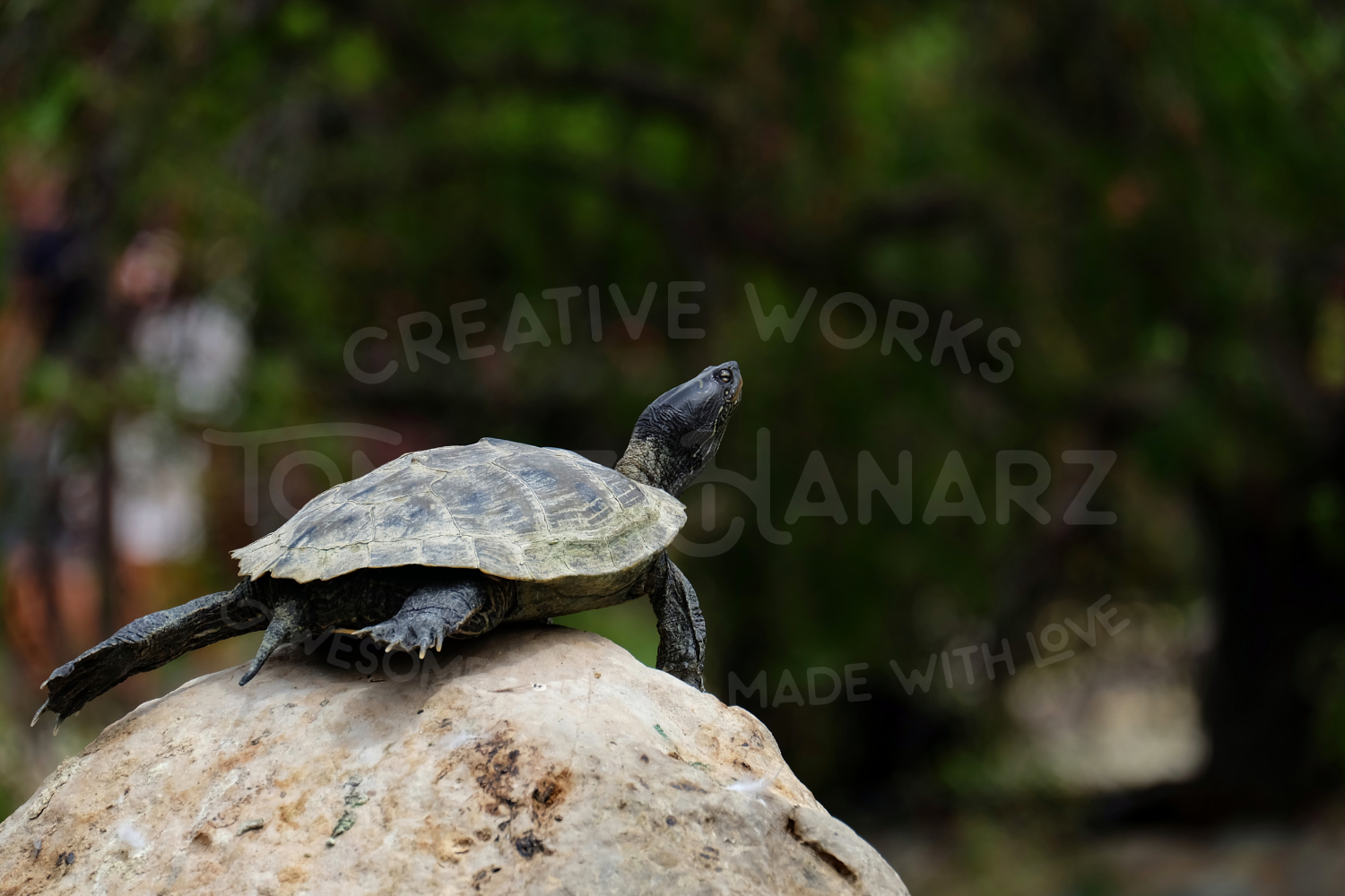 Turtle Photo Pack example image 2