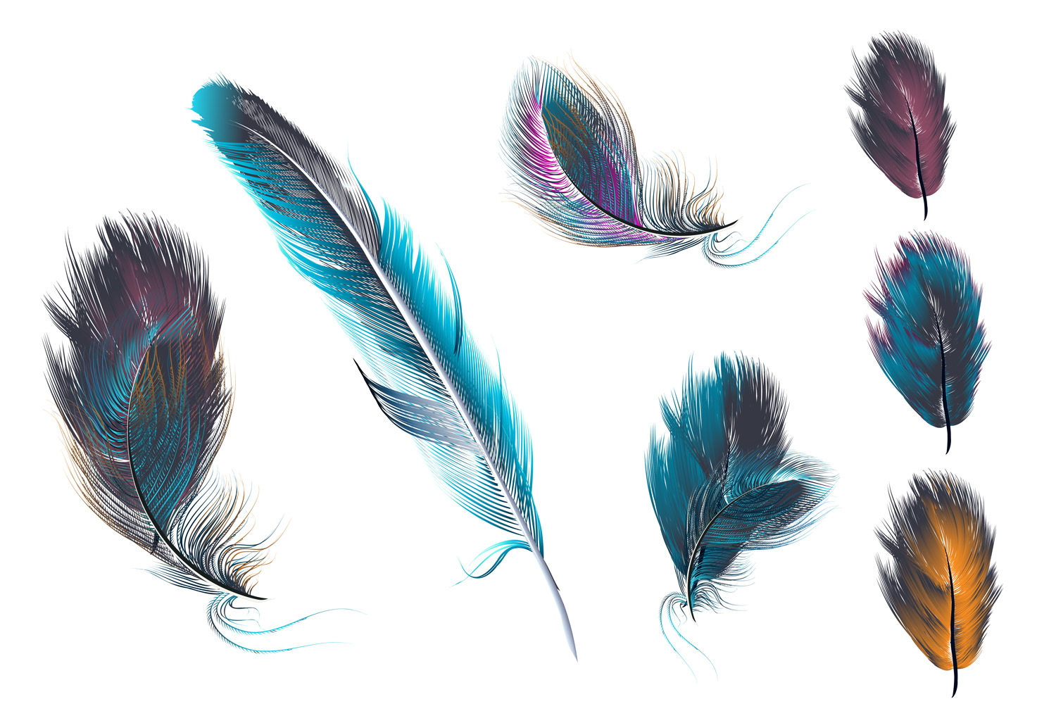 Feathers set. Vector ClipArt example image 3