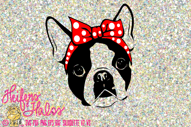 Boston Terrier with Bandana example image 1