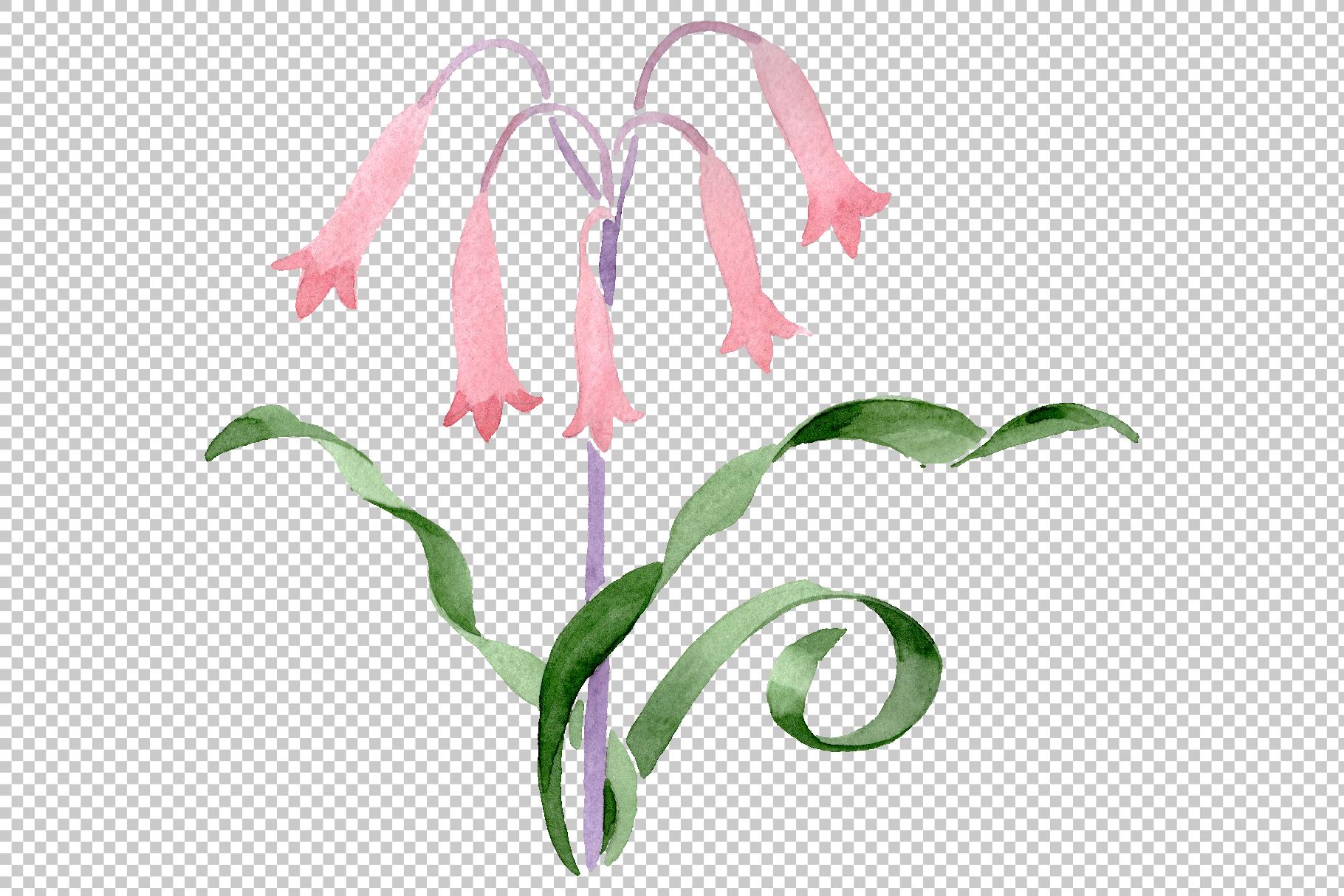 Albuca canadensis Watercolor png example image 16