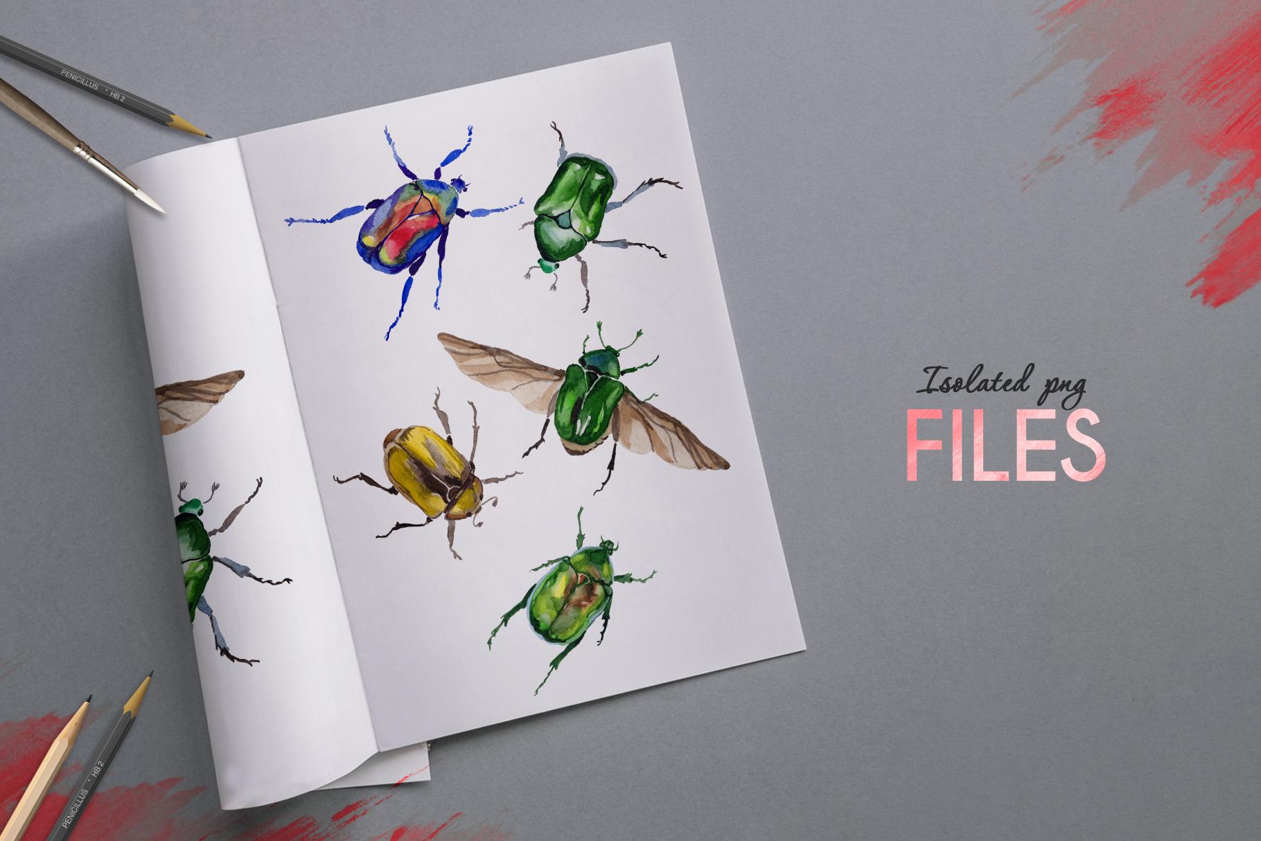 Beetle Cetoniinae,Flower Watercolor png example image 7