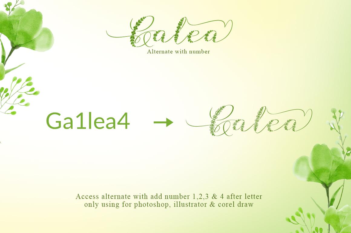 Galea Script example image 8