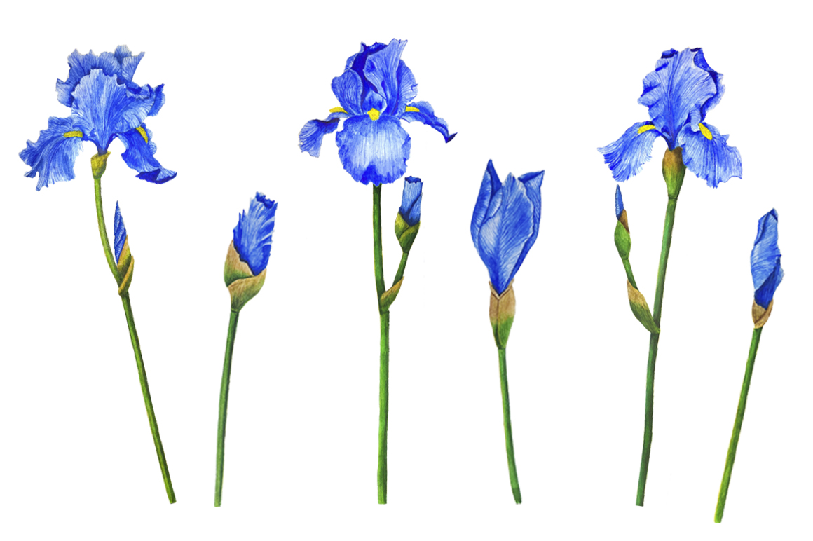 Watercolor flowers irises example image 10