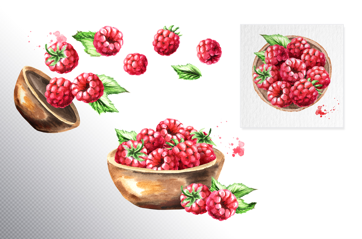 Raspberry. Watercolor collection example image 5
