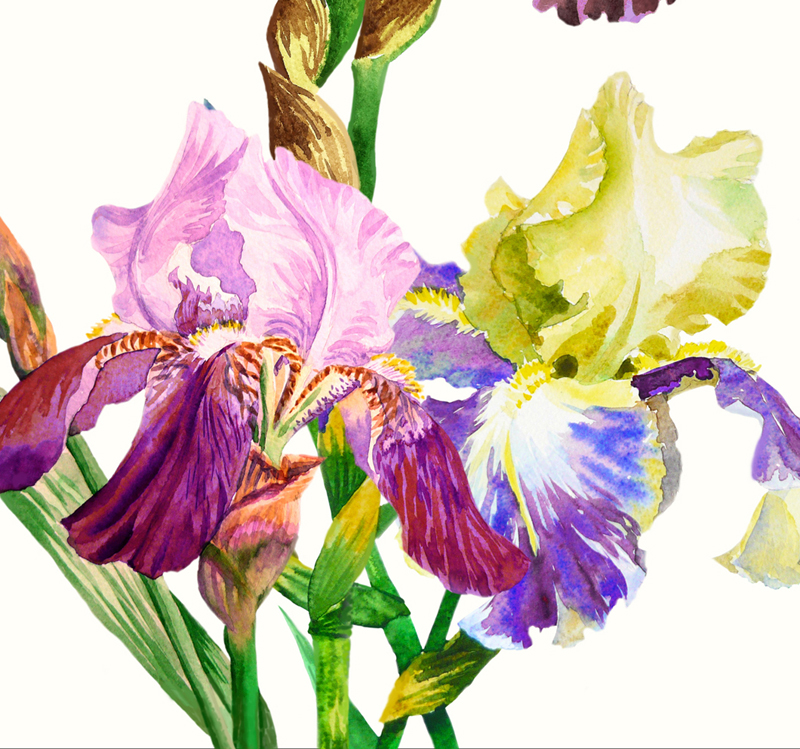 Bouquet with three irises example image 2