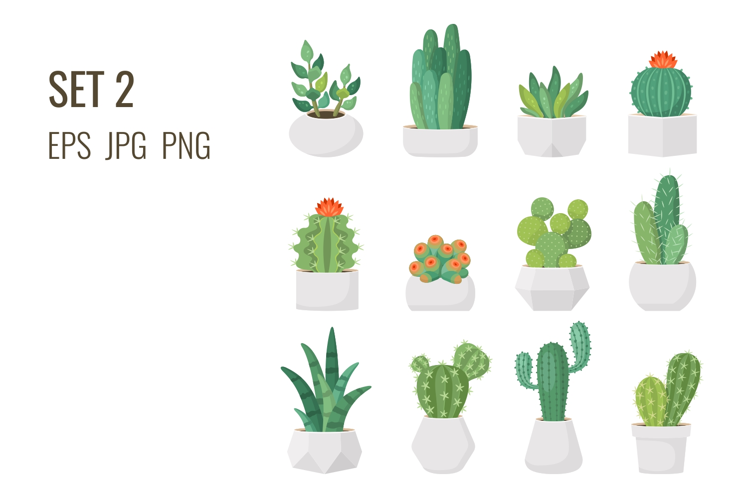 Cacti and succulents in pots example image 3