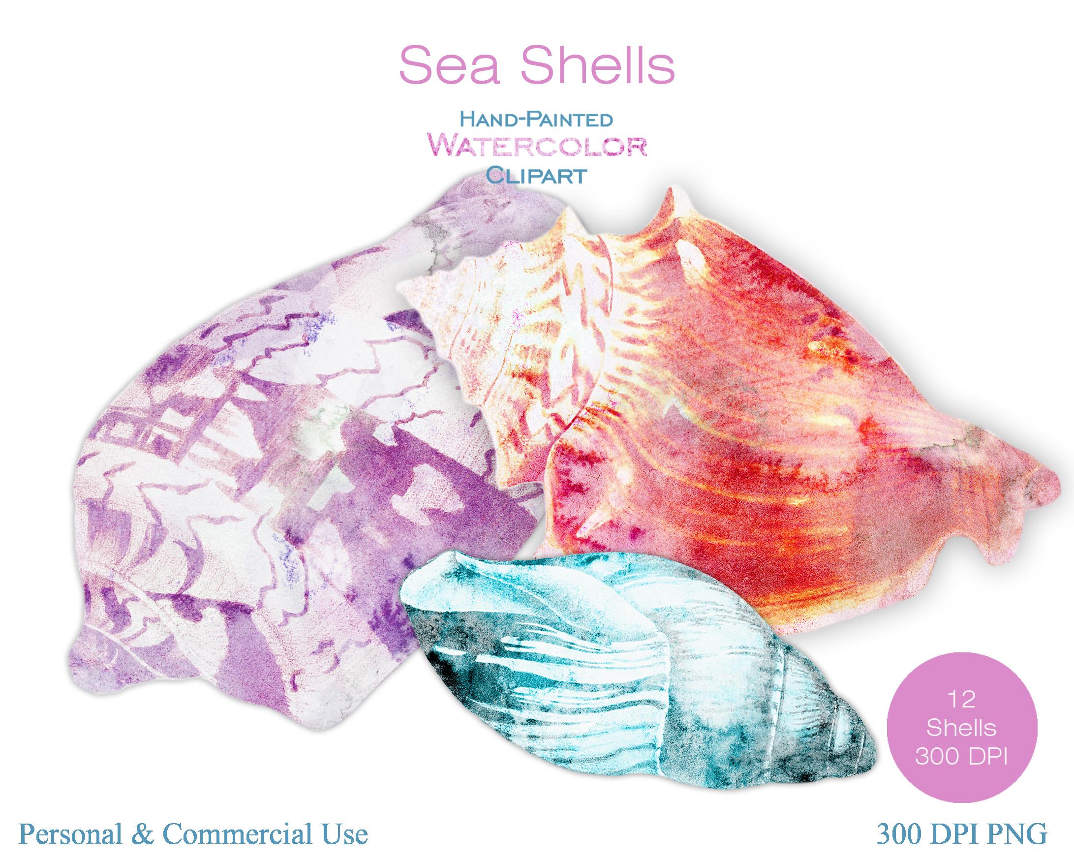 Beach Seashells Ocean Shells Clipart example image 2