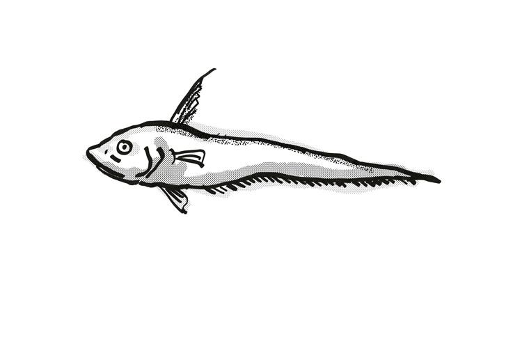 Smallpore Whiptail Australian Fish Cartoon Retro Drawing example image 1