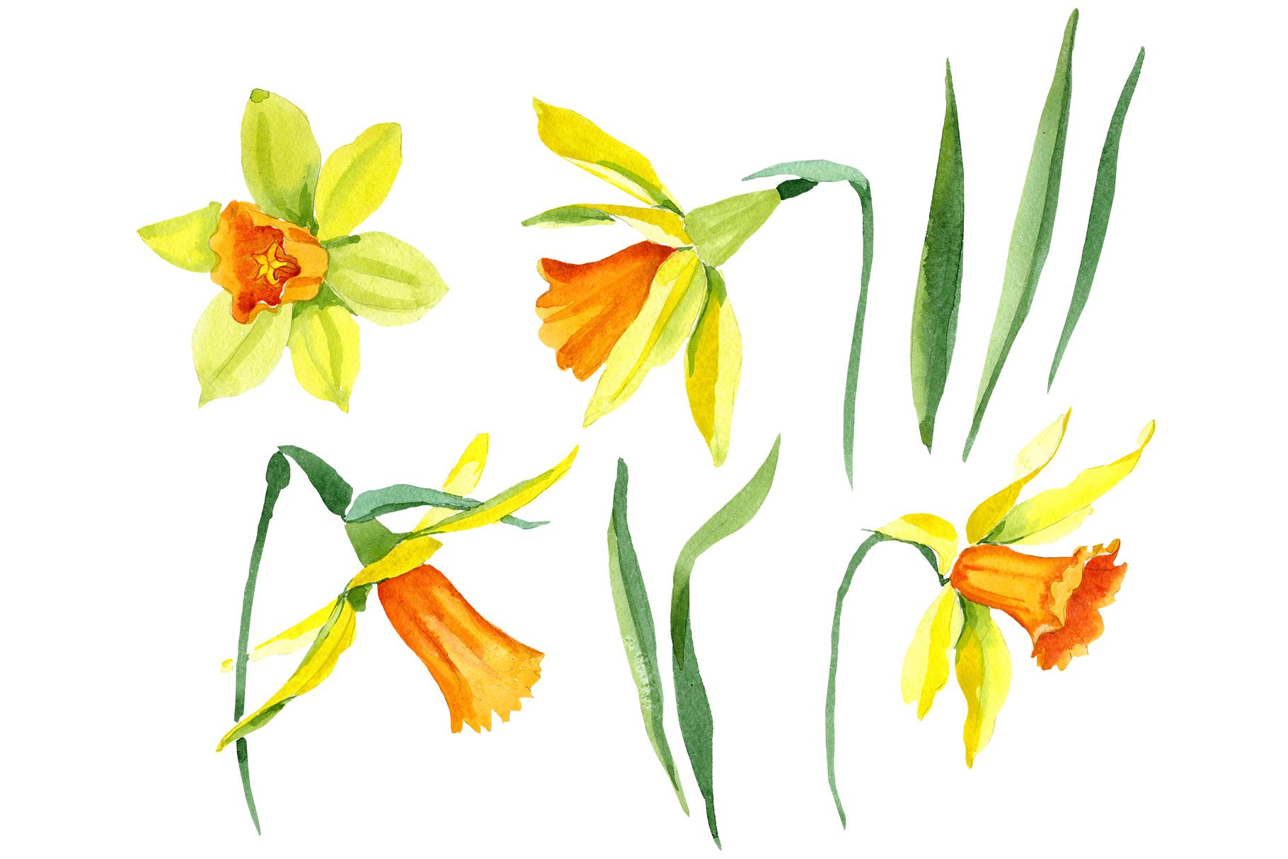 Narcissus lemon flower PNG watercolor set example image 1