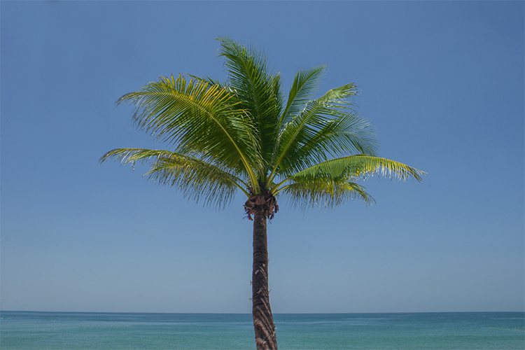 Palm tree example image 1