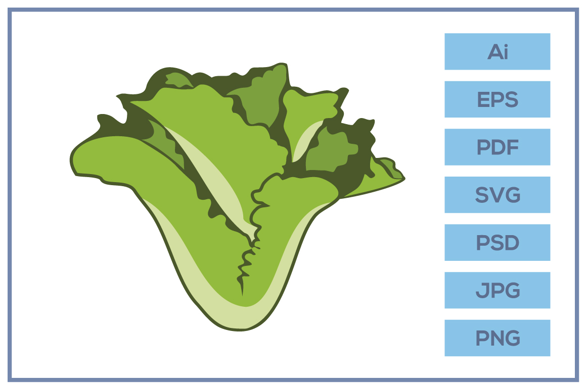 Vector of Lettuce salad design example image 1