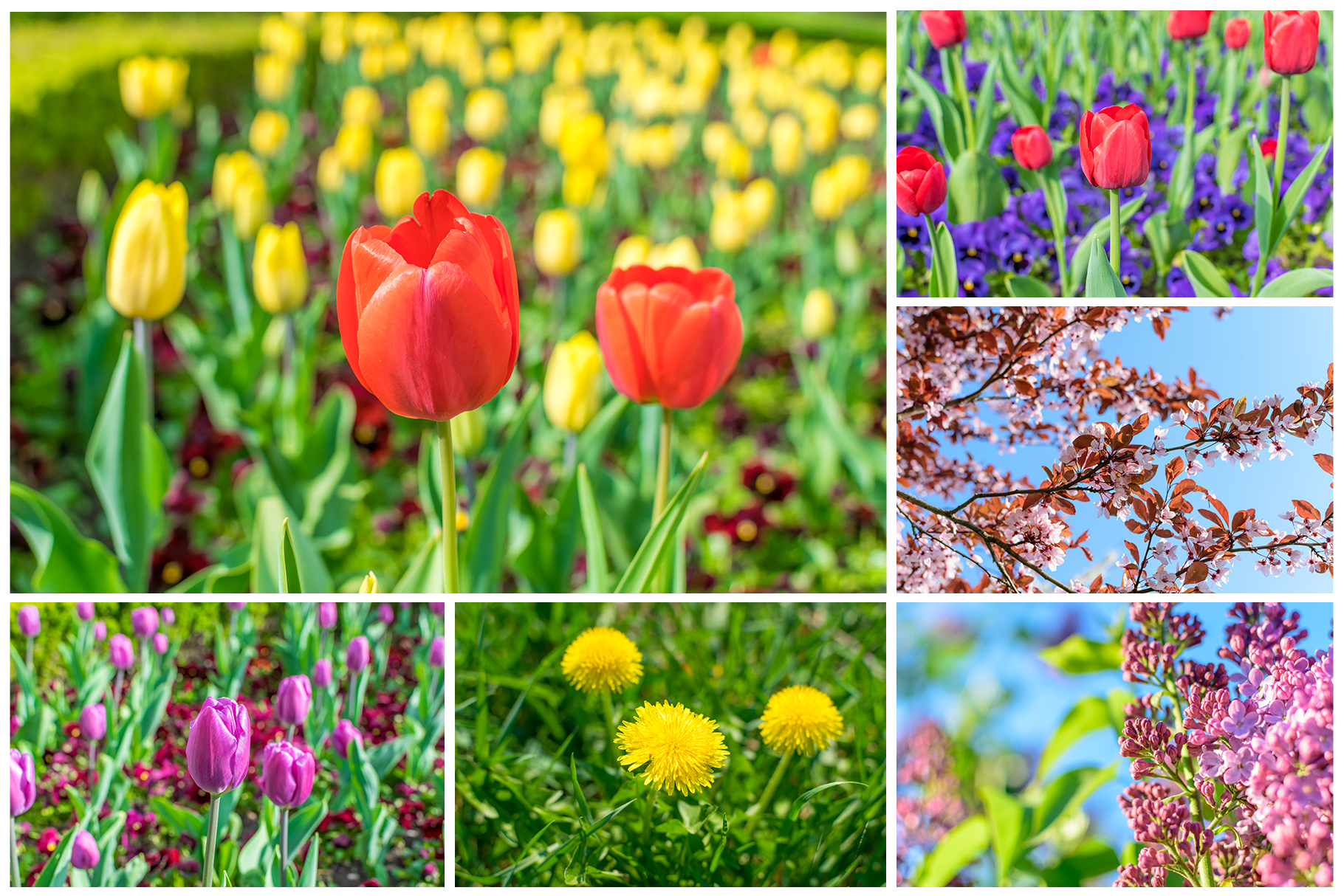 Spring Flowers and Paintings Bundle example image 19