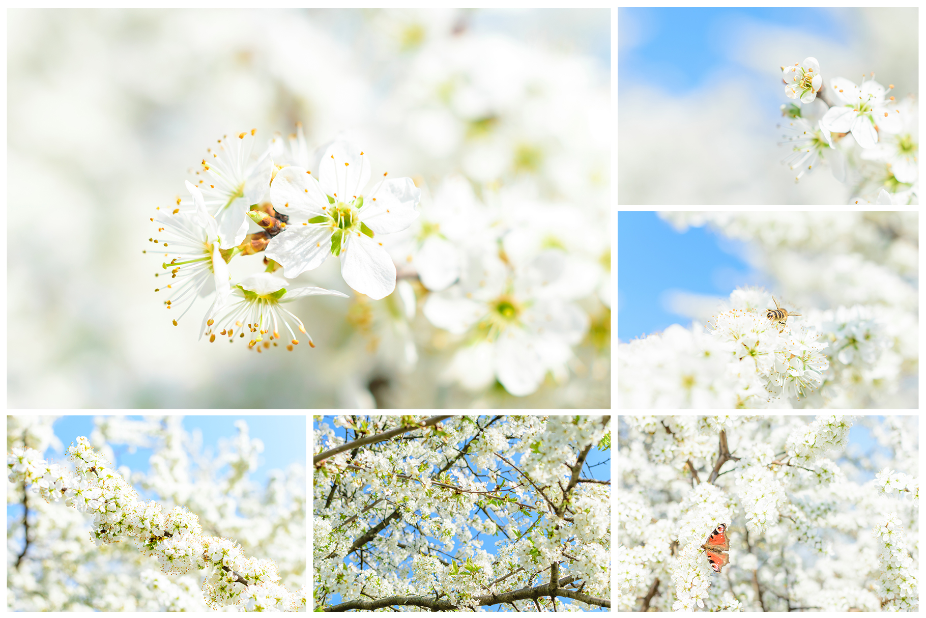 Spring Flowers and Paintings Bundle example image 14