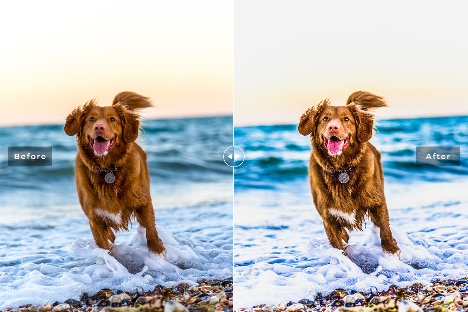 My Dog Mobile and Desktop Lightroom Presets example image 2