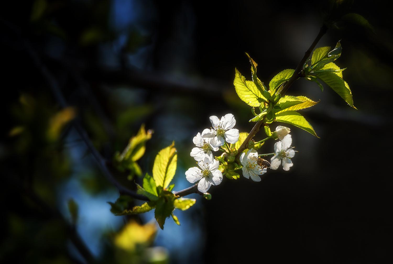 Beautiful plum blossom example image 1