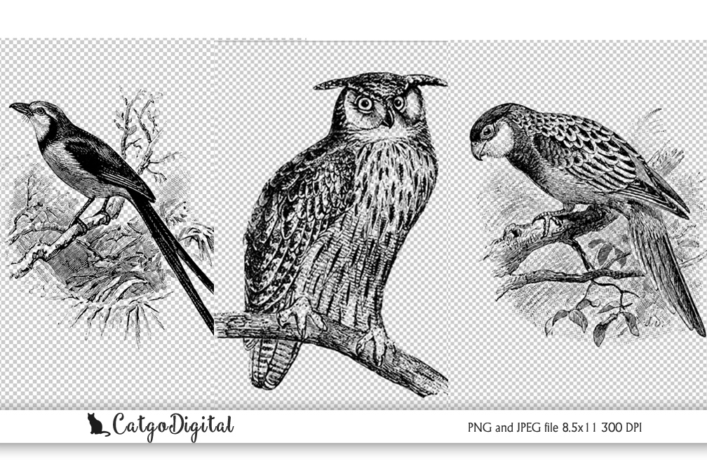 Birds Black and White illustration Vintage PNG example image 1