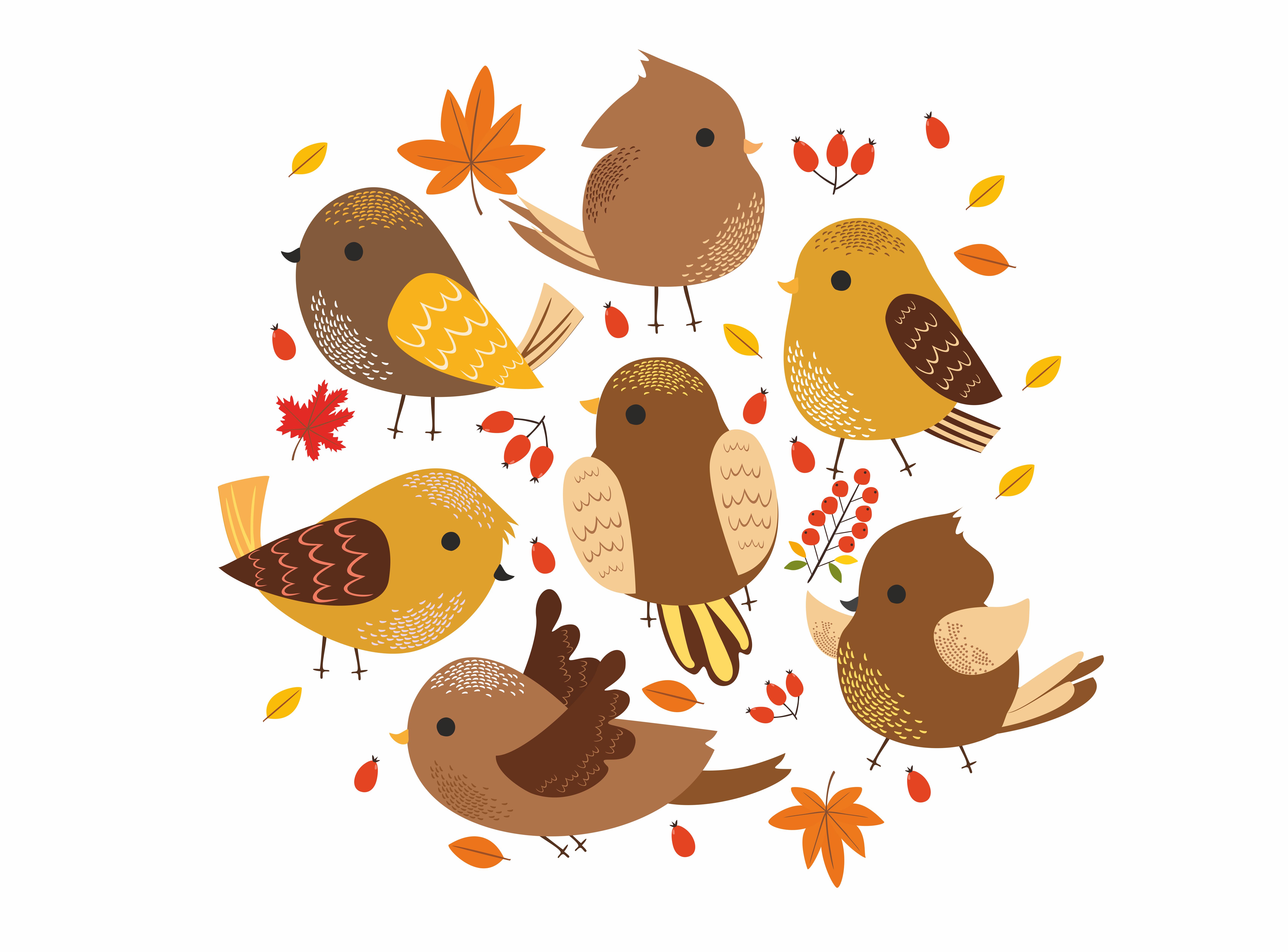 Birds set 2 (vector,jpg,png) example image 5
