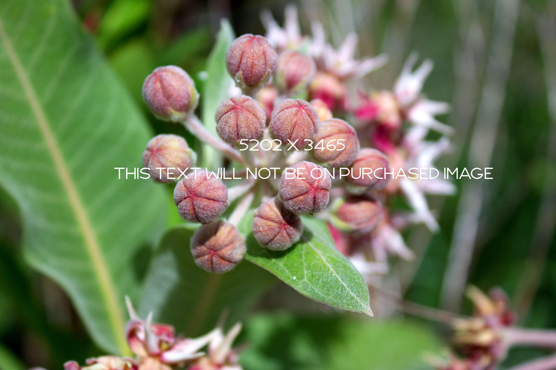 Botanical Photo Bundle, Large Nature Photos example image 5
