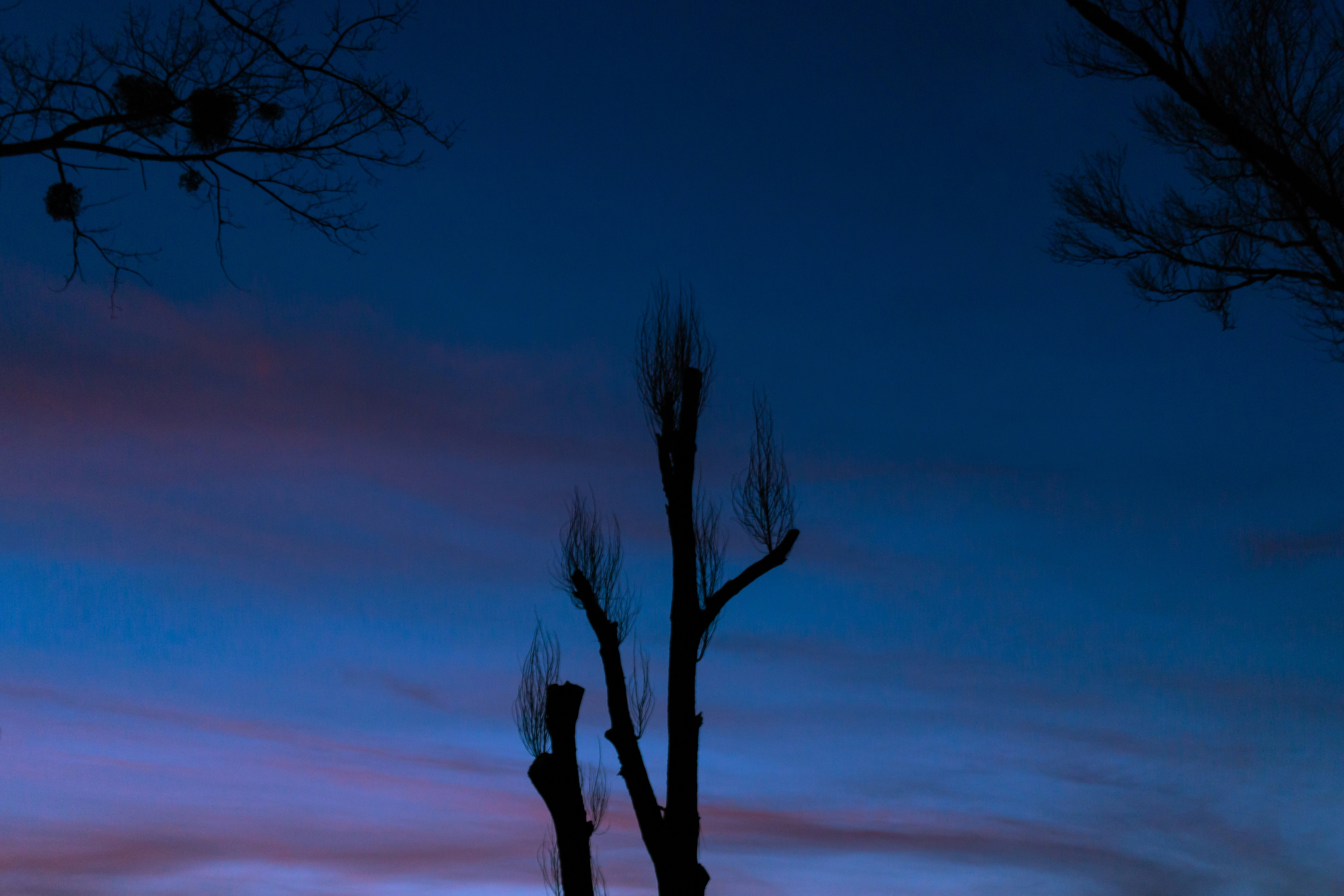 Trees close up at sunset during autumn example image 1