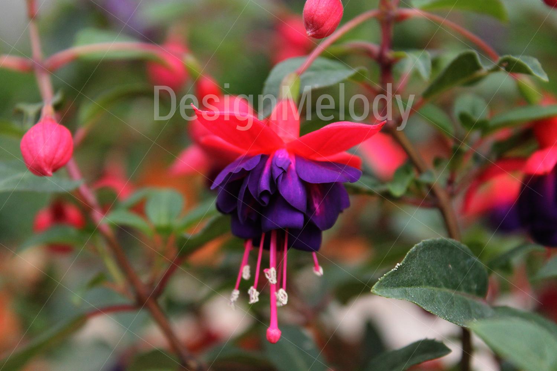 Vibrant Flowers example image 3
