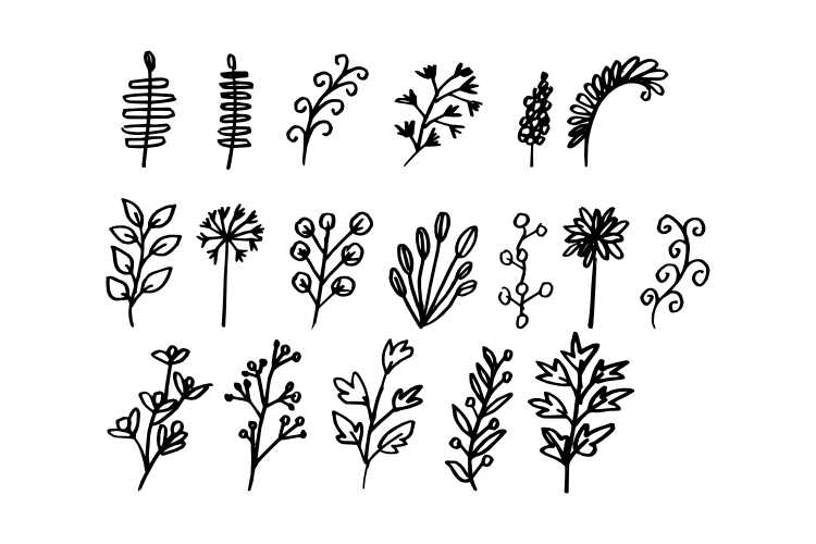 Hand Drawn Leaf Vector example image 1
