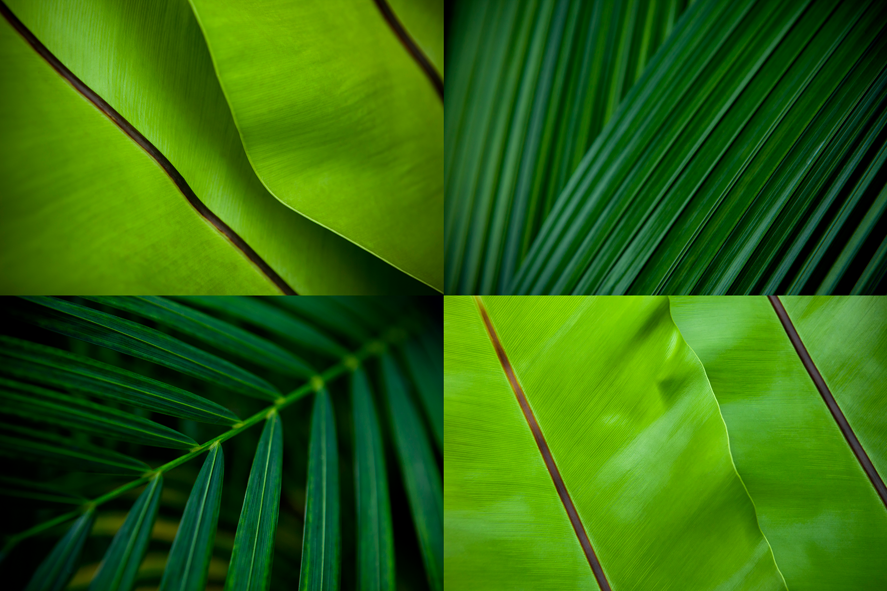 12 Tropical Green Leaves Backgrounds example image 3