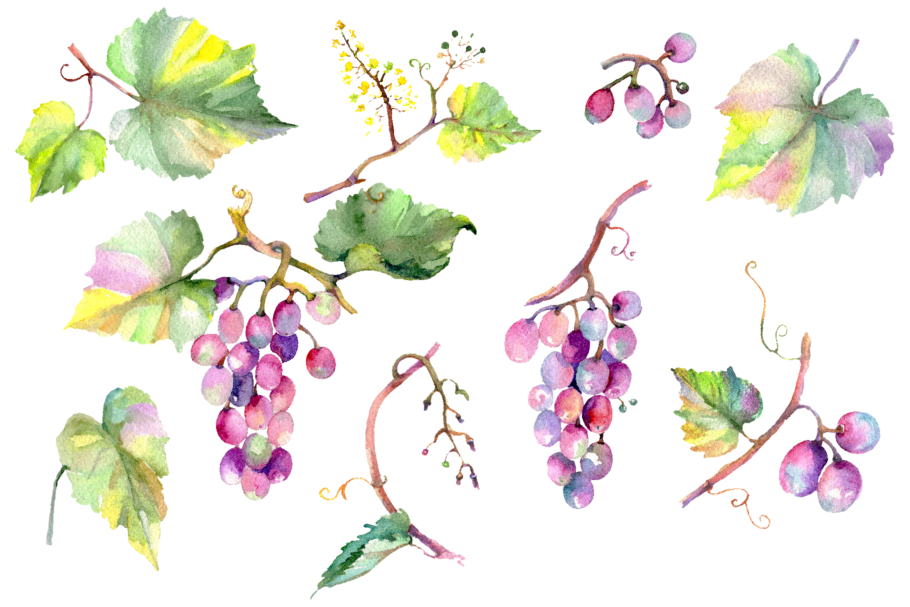 Blue grapes Watercolor png example image 1