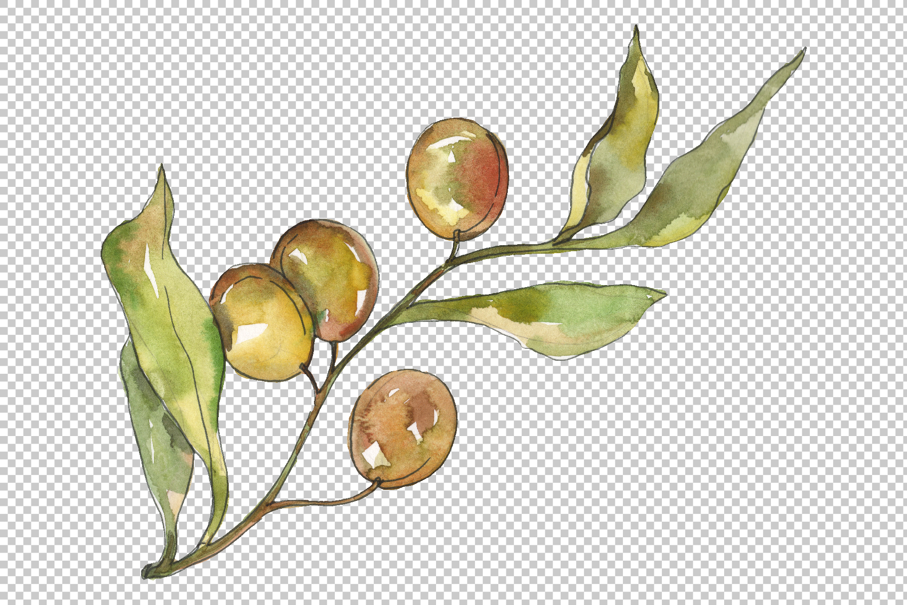 Olives Watercolor png example image 3