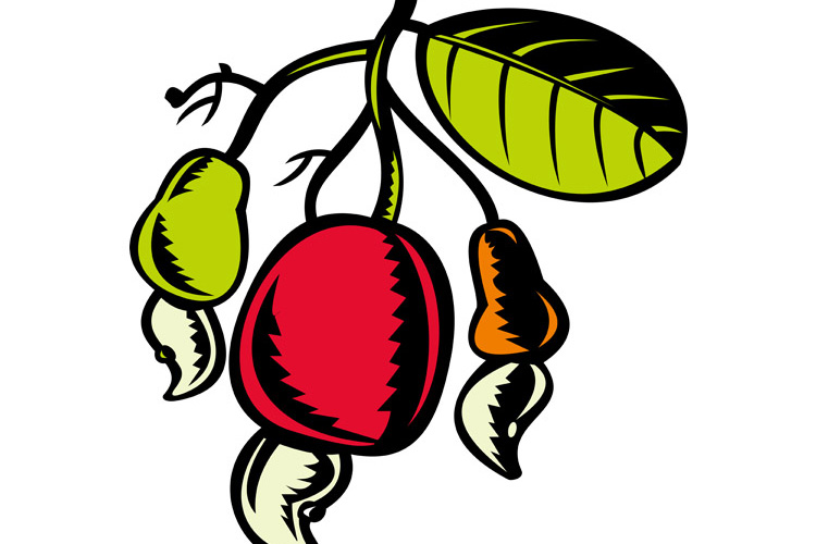 cashew nut and fruit with leaf woodcut example image 1