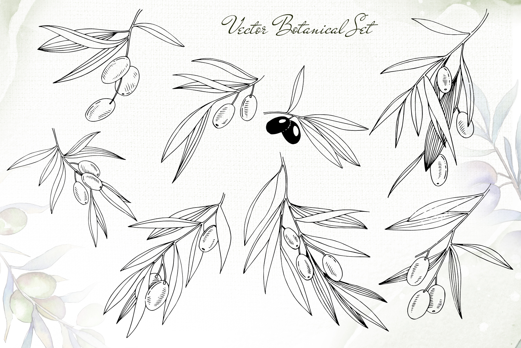 Olive branches collection Watercolor png example image 3