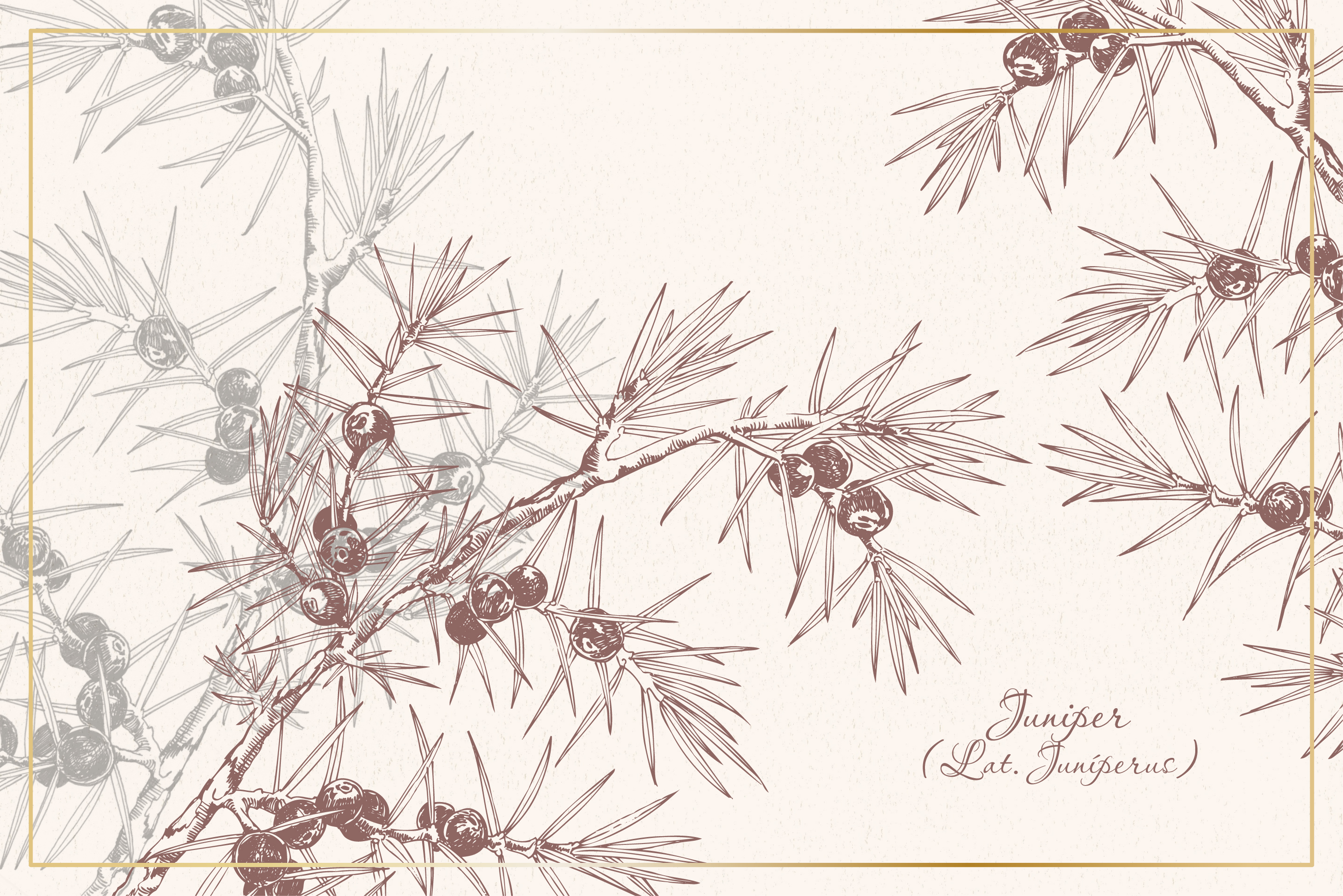 Botanical sketchbook. Vol.1 example image 9