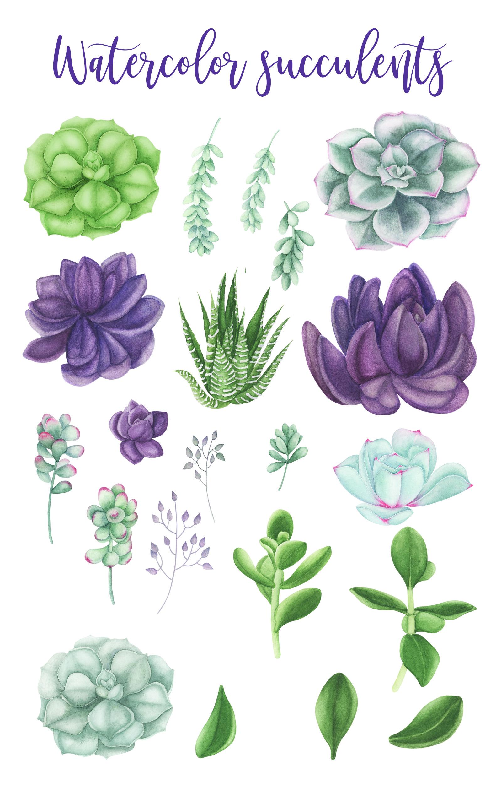 Succulents Bundle example image 2