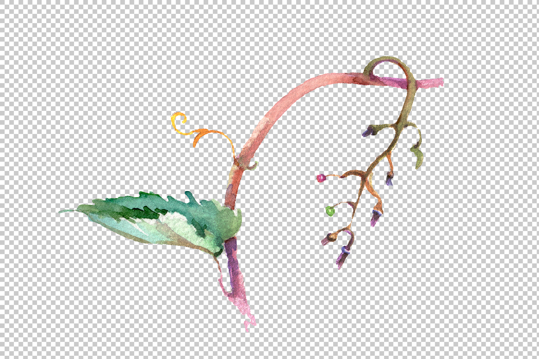 Blue grapes Watercolor png example image 8