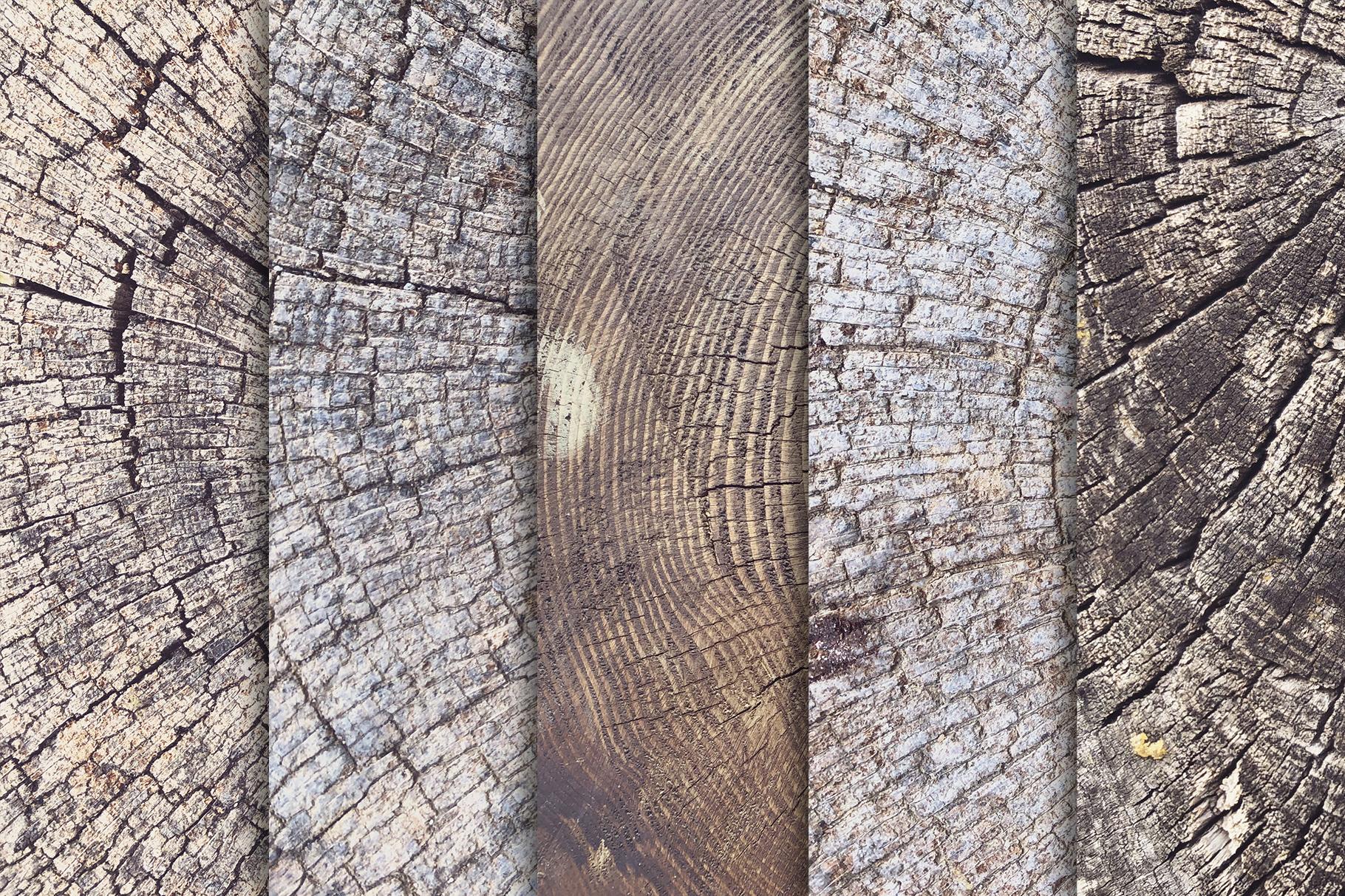 10款树木年轮背景纹理 Tree Trunk Stump Textures X10插图(1)