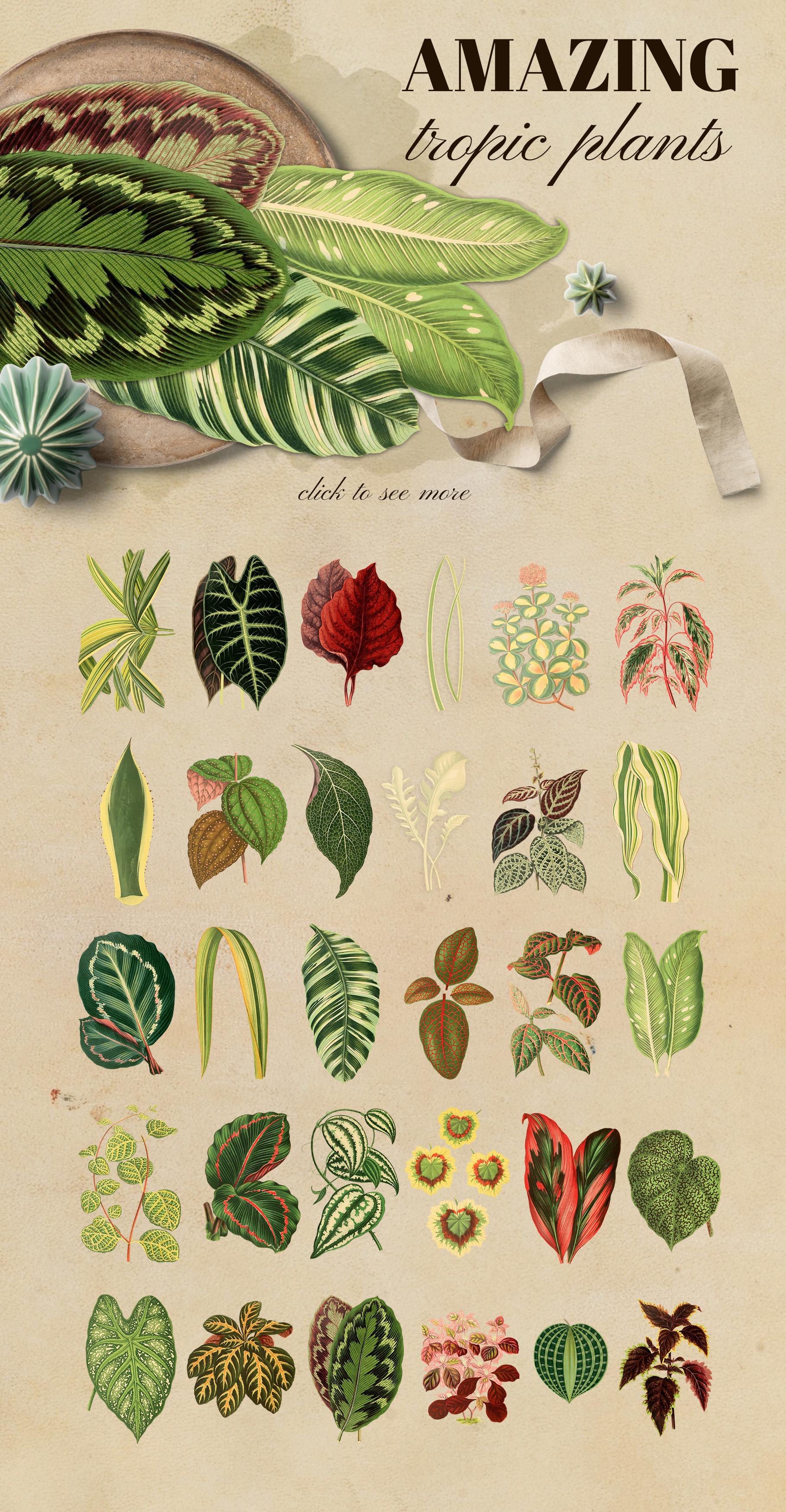 Vintage exotic herbarium design set example image 2