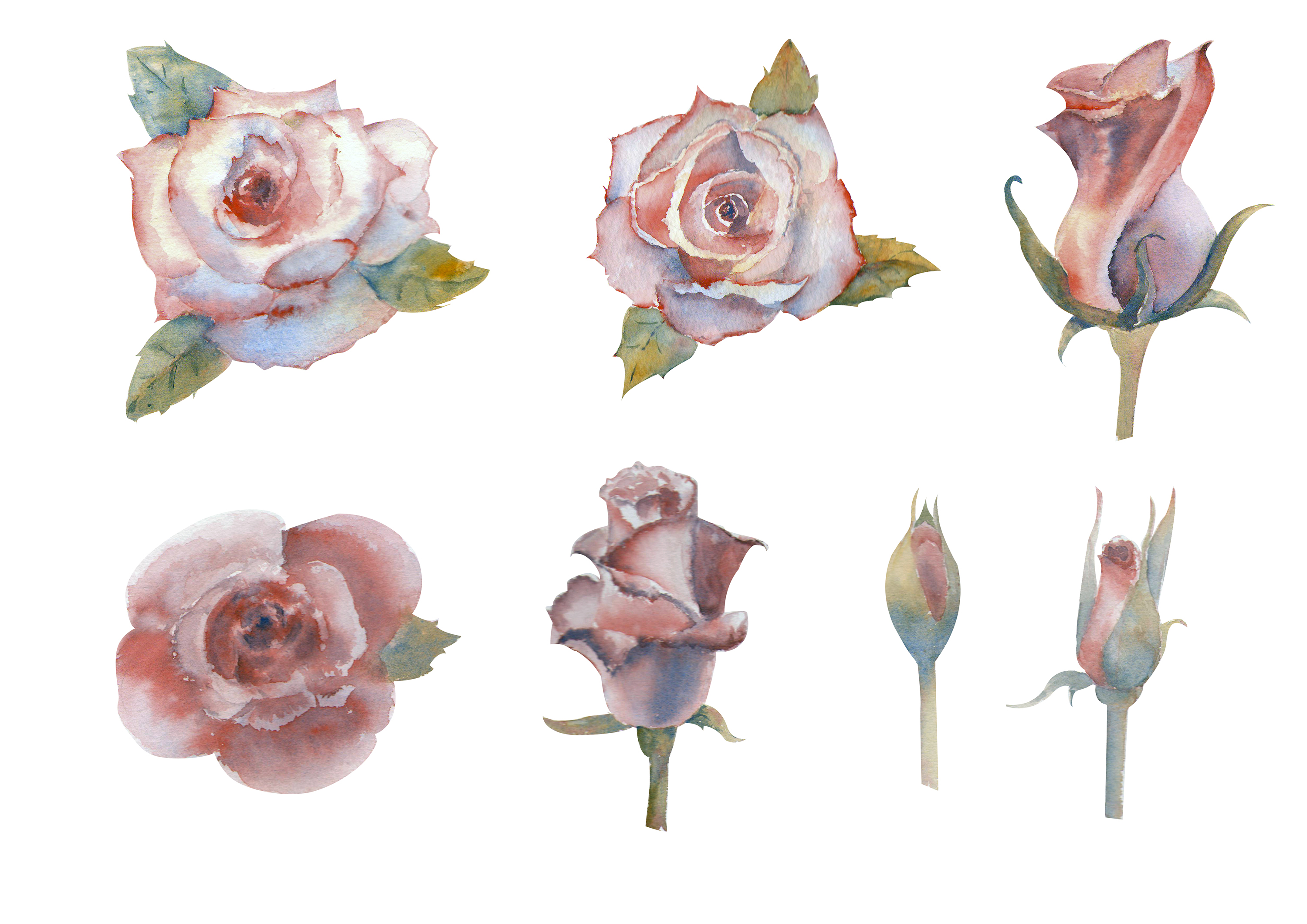 Pink rose. Watercolor. Set of flowers, leaves and berries. example image 6