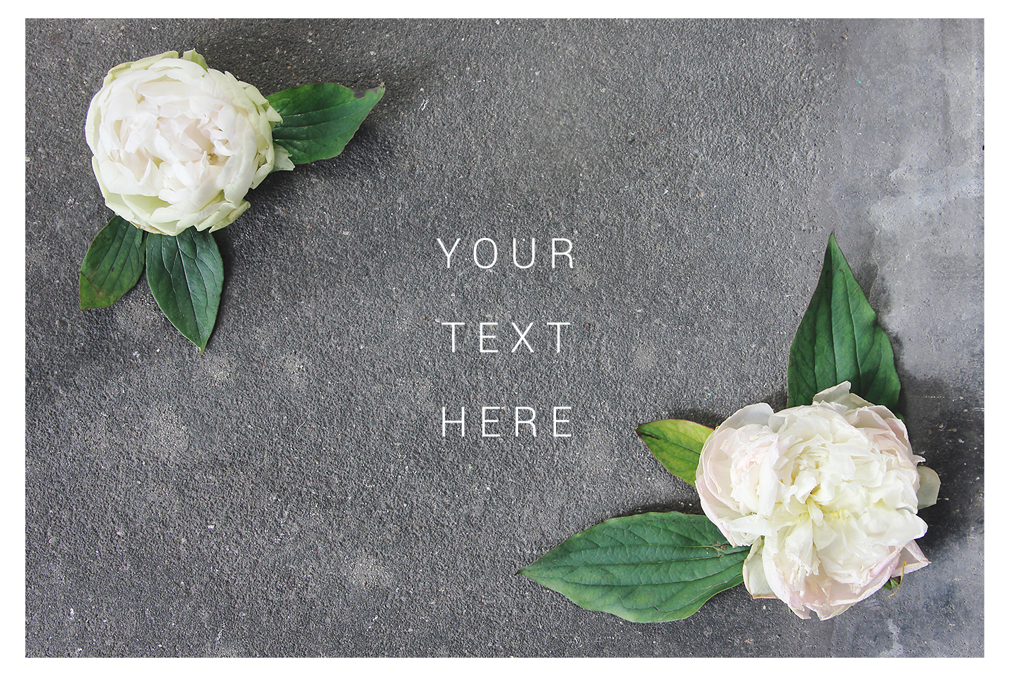 White & gray floral mockup, flower stock images example image 2