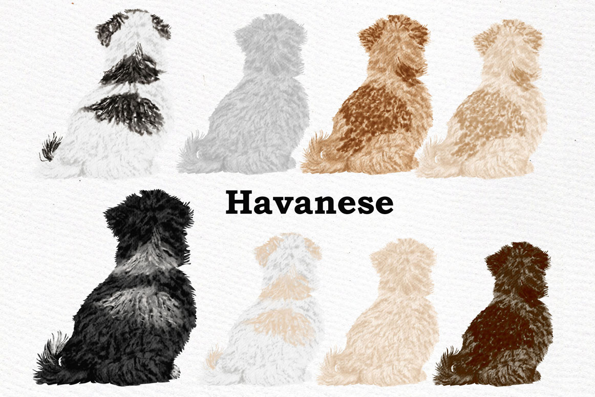 Dog Clipart, Dog breeds, Pet clipart,Puppies clipart Dog Png example image 4