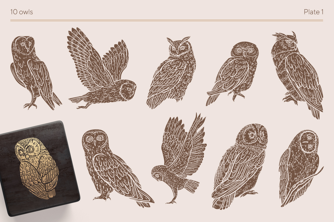 Owls Stories collection example image 2