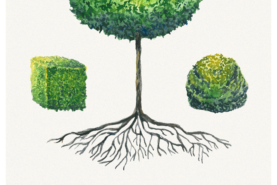 Tree clipart, topiary clipart, garden clipart, trees clipart example image 4
