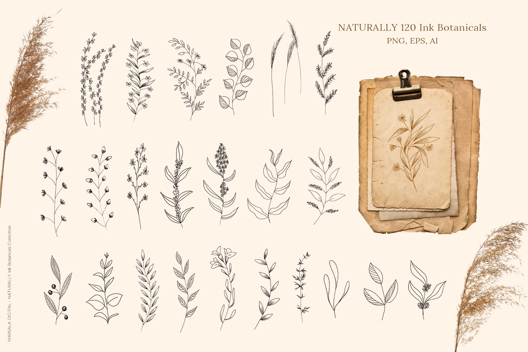 Ink Botanicals Vintage Wildflowers Ink Botanicals Vintage example image 4