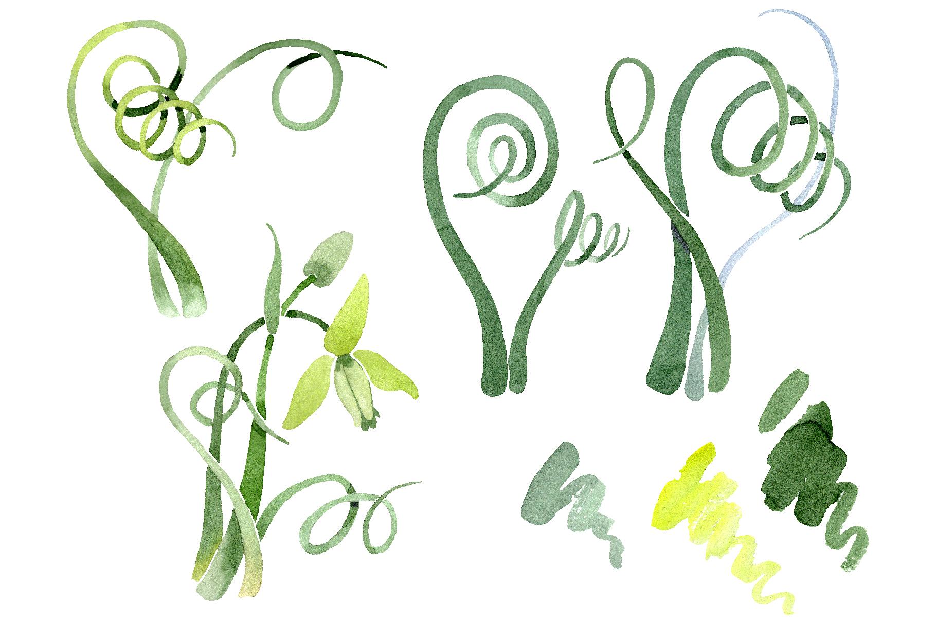 Albuca canadensis Watercolor png example image 1