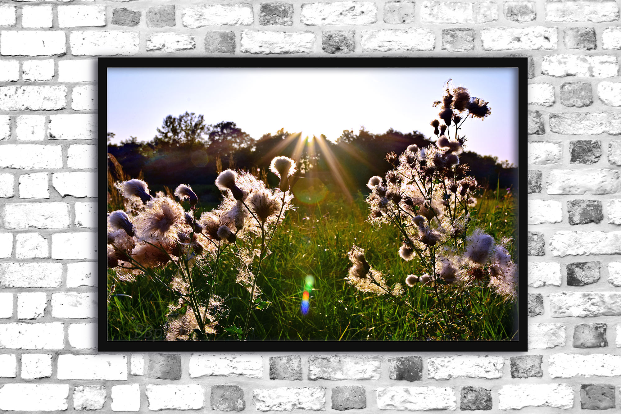 Nature photo, landscape photo, floral photo, fluffy grass example image 1