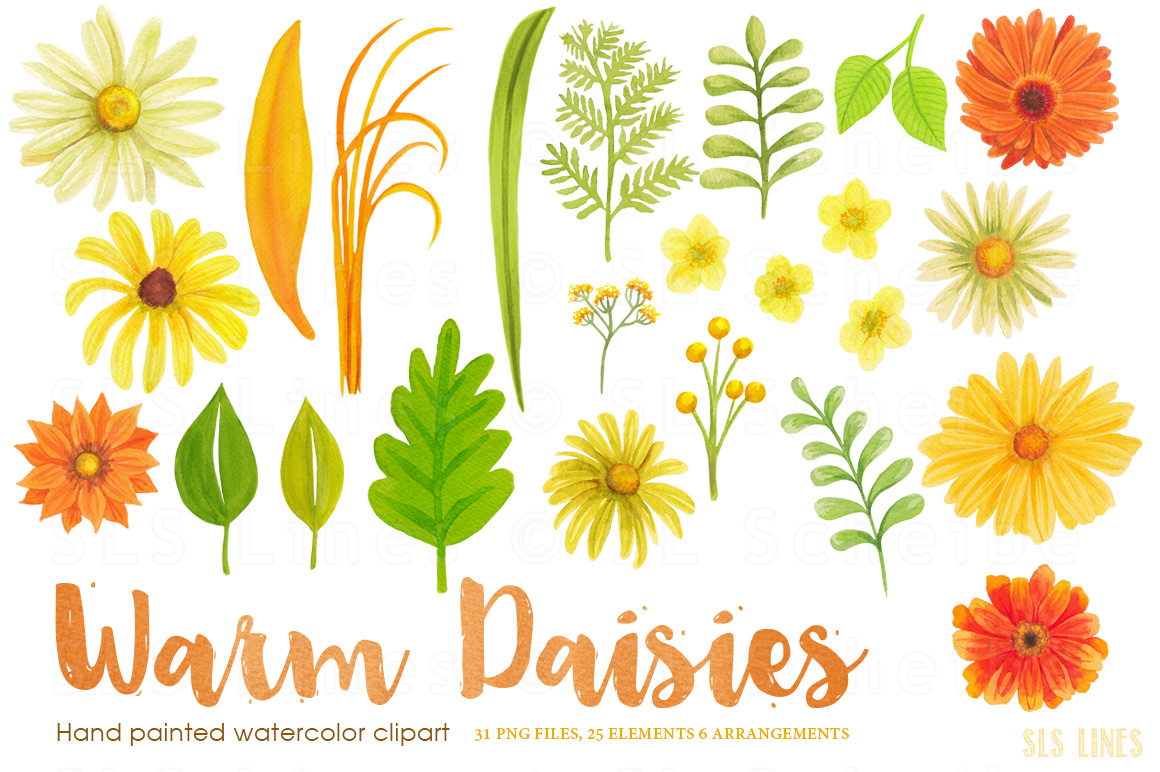 Warm Yellow & Orange Daisies, Watercolor PNG example image 2