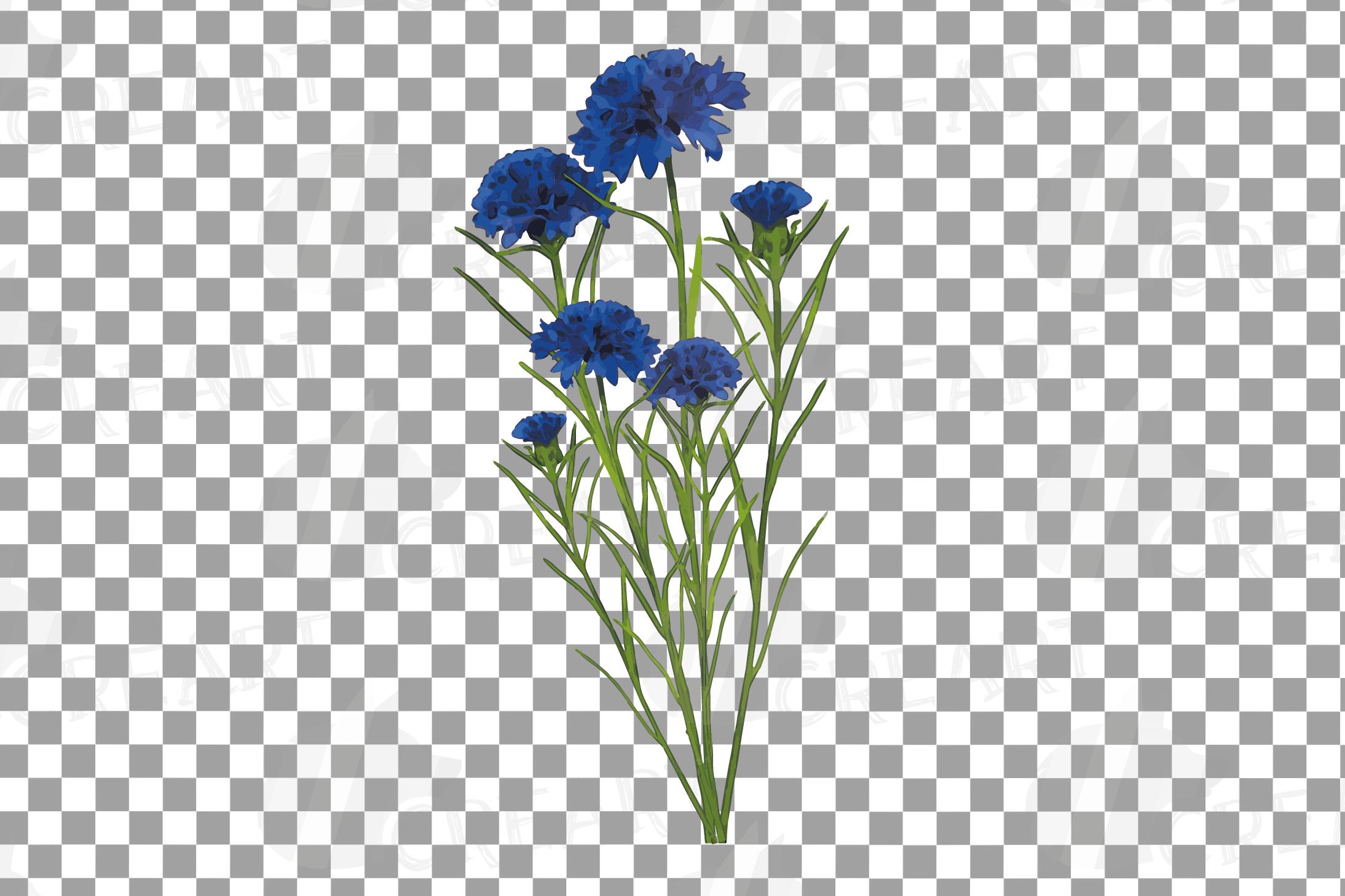 Cornflower watercolor clip art pack, bachelor's button example image 14
