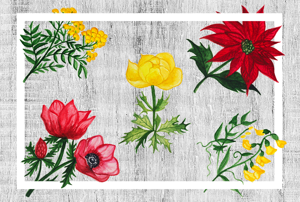 Watercolor Botanical Flowers example image 4