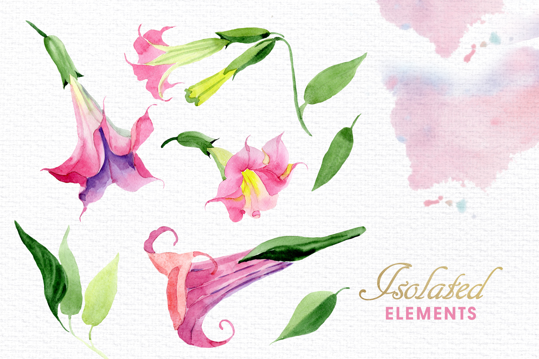 Pink Brugmansia Watercolor png example image 7