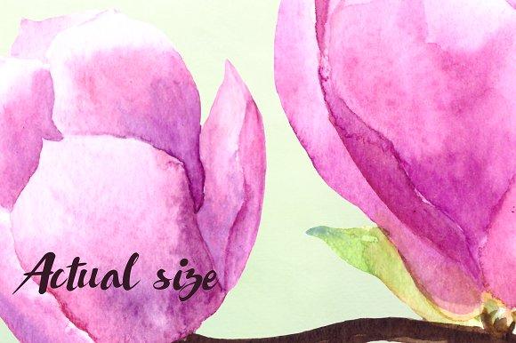 Watercolor Magnolia Clip Art Set example image 3