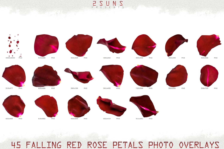 Falling Rose Petals Photo Overlays , Rose Petals, Red Rose example image 8
